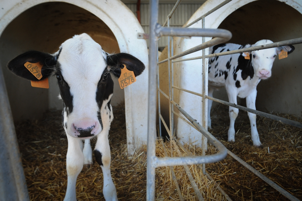 How do we justify the pain we put farmed animals through?