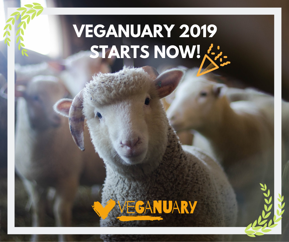 'Then You Win':   Reflections on the rise of veganism in 2019 by Maya Cohen-Ronen