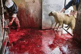 The psychological toll on Slaughterhouse Workers