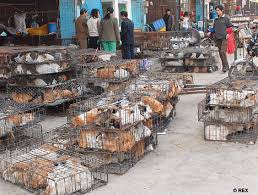 The Chinese Fur Industry Is Cruel and Heartless