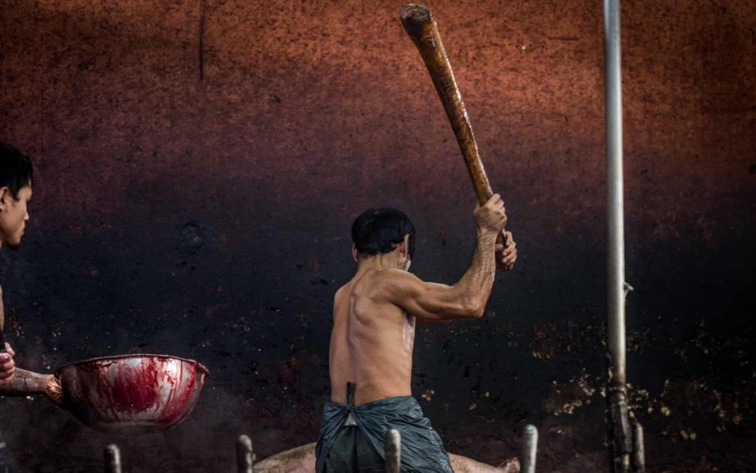 THAILAND'S SHAME IS TYPICAL OF SOUTH EAST ASIAN SLAUGHTERHOUSES