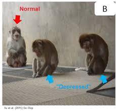 Mental Illness in Animals
