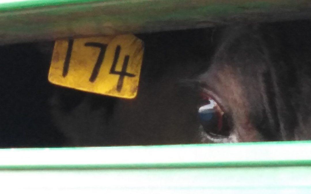 Slaughterhouse Vigil, Land Meats, Whanganui, 22 September, 2019