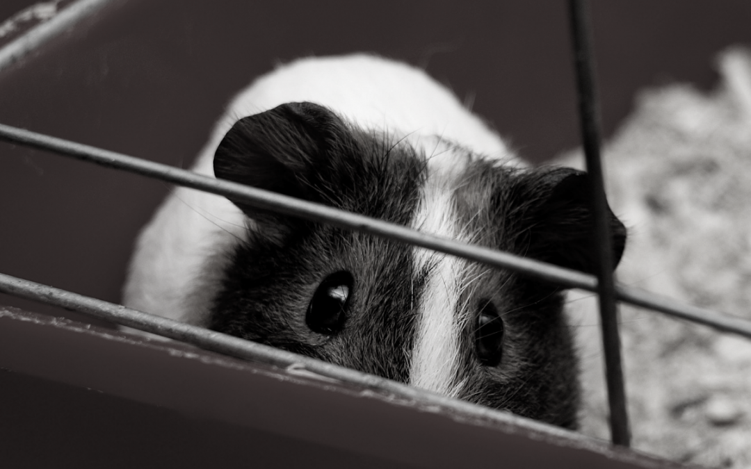 Q&A: Tara Jackson, Executive Director, New Zealand Anti-Vivisection Society