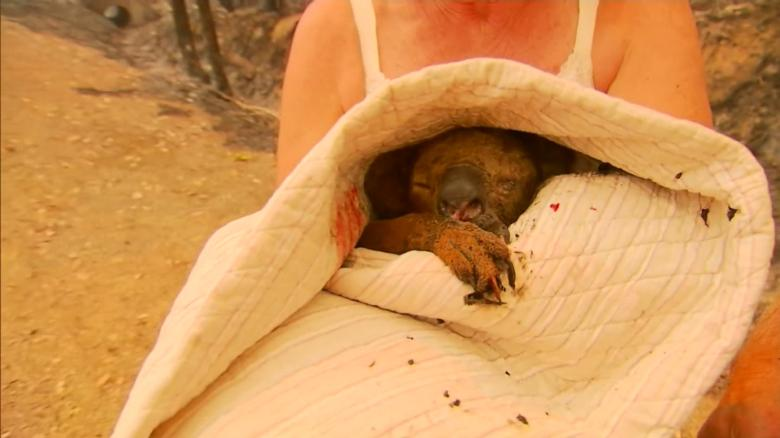When silent animals cry out in pain…