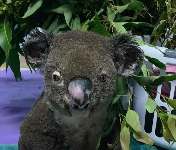 In the wake of Lewis the Koala's death, there is Hope