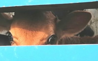SIX REASONS YOU SHOULD GIVE UP DAIRY