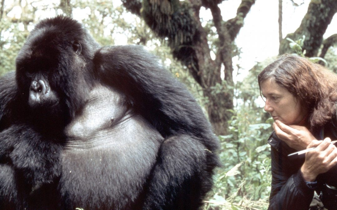 Voices For Animals Across The Years: Dian Fossey