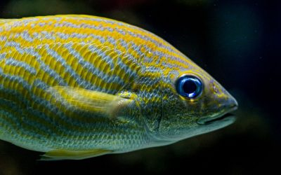 It's Time For A Sea Change In Our Thinking About Fishes