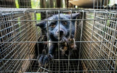 An Indictment Of What Is And Should Never Again Be – The 'Invisible' Animals In Our Lives