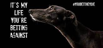 Greyhound Racing Going To The Dogs In New Zealand
