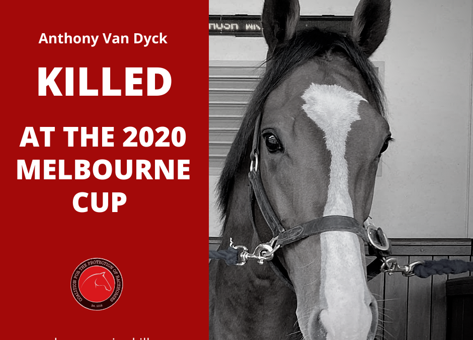 CT Scans For International Horses in Melbourne Cup