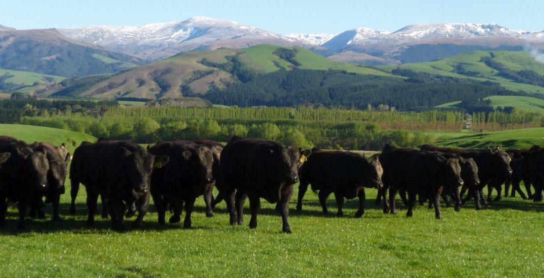 Veganism Increasingly Advocated To Mitigate Carbon Emissions