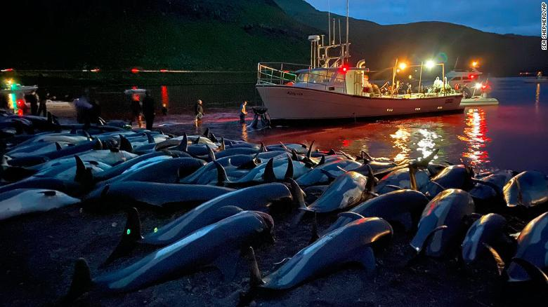Struggling For Breath On The Beach – Dolphin Slaughter In The Faroe Islands